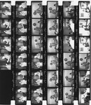 Various Contact sheets of images of Mickey Leland in 1979 ; In Office ; At Meetings, ; on Committes ; Pre-swearing In Ceremony ; Party at TSU ; 5th Ward Reception ; El Franco Lee in Austin Texas